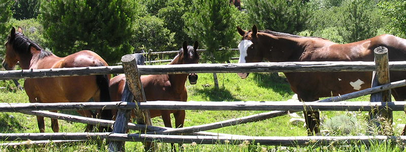 Utah Horse Properties Photo4
