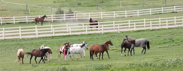 Horse Properties in Riverton
